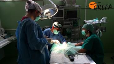Veterinarios y voluntarios de GREFA durante la cirugía al mochuelo. Foto: GREFA.