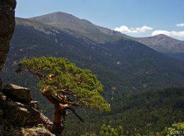 El monte Cabeza de Hierro o Pinar de los Belgas, en la cabecera del valle de El Paular.