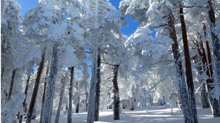 Bosque de la Sierra de Guadarrama cubierto por la nieve.