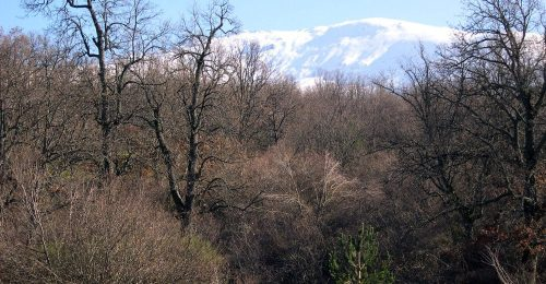 Paisaje de los bosques serranos de Valsaín. Foto: OAPN.