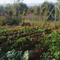 Greenpeace alerta del peligro que corre la España rural y sostenible frente a la gran superficie comercial