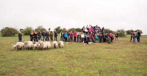 Exhibición de técnicas de pastoreo. Foto: Ayto. Colmenar Viejo.