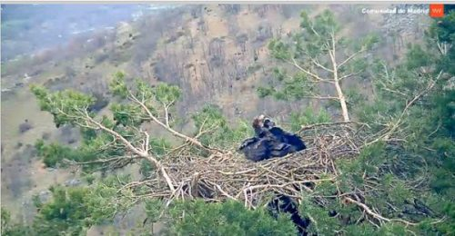 Imagen de la webcam en directo.