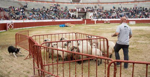 Exhibición de pastoreo en una edición anterior de las Jornadas.