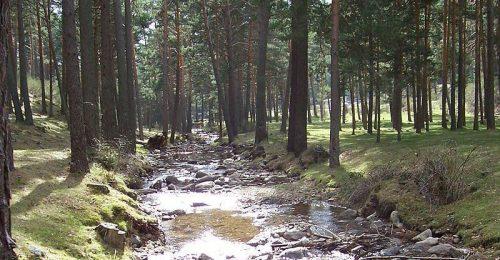Río Moros a su paso por los bosques de pinos de El Espinar. Foto: Mig77angel.