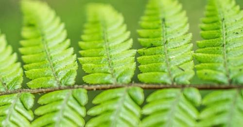Biodiversidad vegetal: ciencia y tradición.