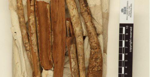 Una de las digitalizaciones del Herbario que ahora se puede consultar online.