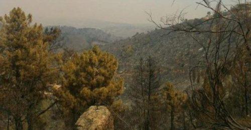 Zona forestal afectada por un incendio.