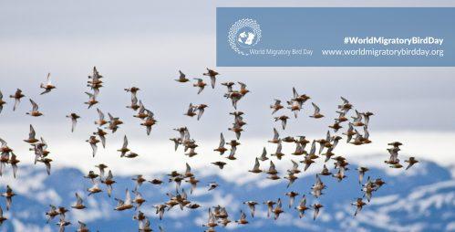 Aves en plena migración.