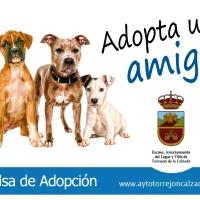 Torrejón de la Calzada pone en marcha una nueva campaña de adopción responsable de animales