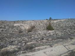 Desertificación en Fuentidueña de Tajo. Foto: Reforesta.