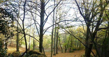 Bosque de La Herrería, en San Lorenzo de El Escorial.