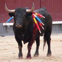 Advierten al Gobierno que sería injustificable el rescate económico de la tauromaquia
