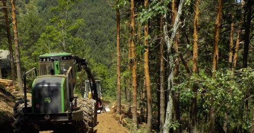 Zona en la que se está trabajando en la actualidad. Foto: Ecologistas en Acción.
