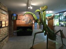 Una de las salas expositivas de InsectPark.