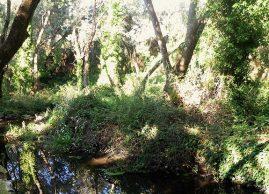 Patrimonio natural de Torrelodones. Foto: Ayto. Torrelodones.