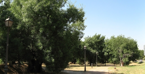 000254_-_Boadilla_del_Monte_(2677406072)