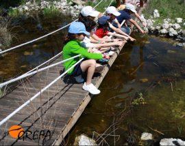 Varios niños observan una charca integrada en las instalaciones de educación ambiental de GREFA.