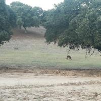 La Berrea y la verja del Monte de El Pardo