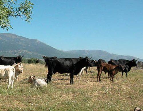 Aumenta en 12.000 hectáreas la superficie de pastos en los montes públicos de la región