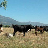 Asaja Madrid reclama una batería de medidas para paliar las consecuencias de una sequía