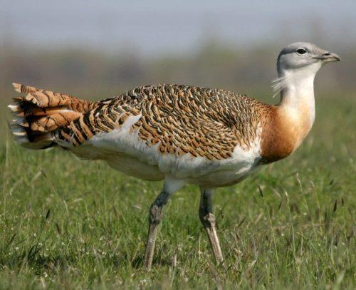 SEO/BirdLife lanza una batería de medidas prioritarias para el medio ambiente