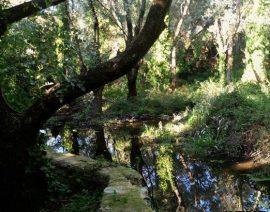 Sendas ambientales guiadas por Torrelodones durante el verano. Foto: Ayto. Torrelodones.