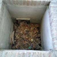 Denuncian la falta de mantenimiento de las caceras que riegan las arboledas históricas de Aranjuez