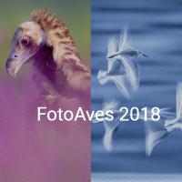 Abierta la XI edición del concurso de fotografía de naturaleza 'FotoAves'