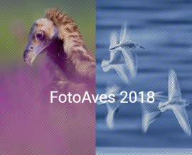 Abierta la XI edición del concurso de fotografía de naturaleza 'FotoAves'.
