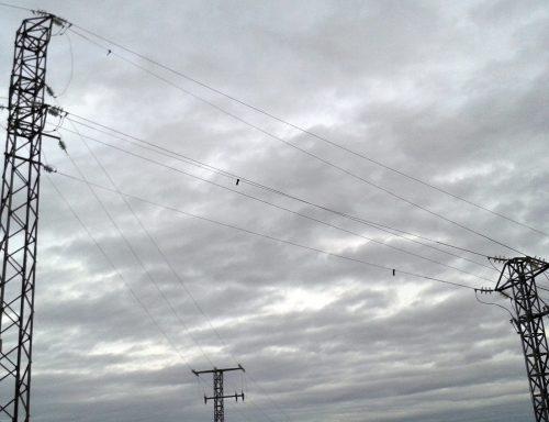 Solicitan al Defensor del Pueblo actuaciones ante la mortalidad que los tendidos eléctricos provocan sobre la avifauna. Foto: SEO/Birdlife.