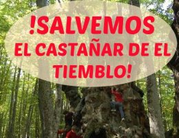 La Plataforma ha puesta en marcha una recogida de firmas en en defensa de este bosque abulense.