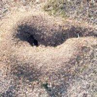 La labor ingeniera de las hormigas puede influir en los estudios paleoclimáticos