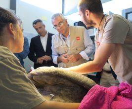 La Comunidad atiende cada año a más de 3.300 animales silvestres heridos. Foto: CAM.