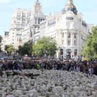 Las ovejas vuelven para celebrar el 600 aniversario de la trashumancia en Madrid