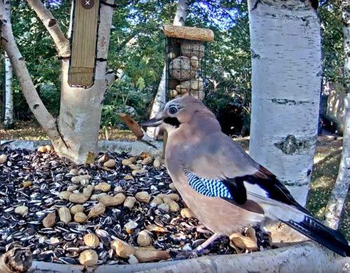 Sigue a los pájaros de los bosques del Lozoya.