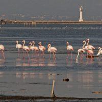 Ecologistas en Acción, SEO/BirdLife y WWF reclaman un giro de la política del agua
