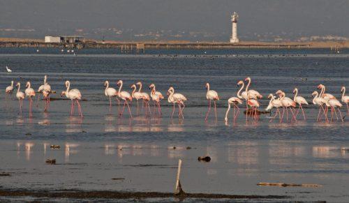 Delta del Ebro, amenazado por la falta de sedimientos (que quedan retenidos en las presas) con la consecuente intrusión marina ©SEO/BirdLife.