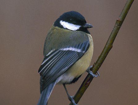 El Ayuntamiento de Madrid y SEO/BirdLife estudian las aves para conocer la calidad de vida en la ciudad.