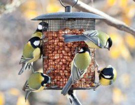 Carboneros en un comedero. Foto: SEO/Birdlife.