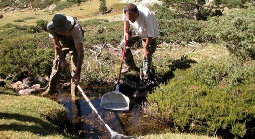 Pesca eléctrica para eliminar salvelinos en el entorno del Parque Nacional.