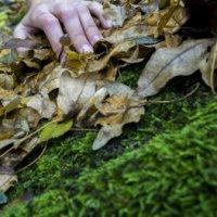 La Comunidad recuerda la prohibición de recoger musgo, tejo o acebo en el campo