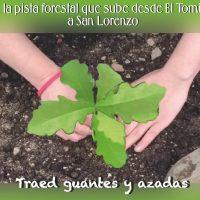 Nueva plantación de especies autóctonas en Abantos