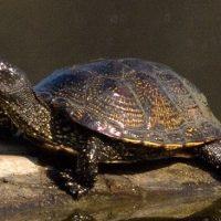 Las especies en peligro de extinción en la Comunidad de Madrid