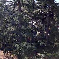"""El Opus Dei """"tala"""" 55 árboles de gran porte en Las Rozas"""