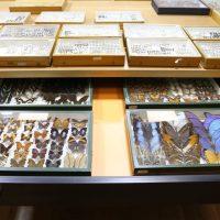 La Casa de Campo alberga una de las colecciones más importantes de escarabajos y mariposas