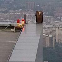 Las cámaras de una de las Cuatro Torres de Madrid captan un buitre leonado posado en su azotea