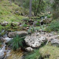 Los ríos del Parque Nacional gozan de un buen estado ecológico