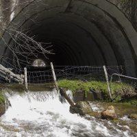 Carreteras en torno a la Sierra de Guadarrama: un sumidero para los lobos