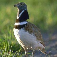 La Asamblea aprueba la creación de un nuevo espacio protegido de la Red Natura 2000
